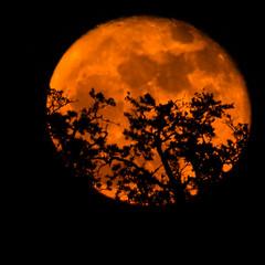 FullMoon_11_15_2016 045 (VinceFL) Tags: fullmoon lighthouse luna lunar manfrottotripod moon nature nikond7100 nikonmll3 outdoors saintsimonsislandga sky southern sunset tamron70300mmf456dild12autofocusmacro vincefl
