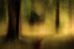 Between the Trees (aveyardphotography) Tags: abstract intentional camera movement icm trees woods woodland forest canopy bright dappled light blur blurred leafy trunk colourful colorful daylight enclosed nature natur