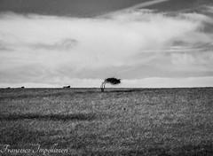 Loneliness (Francesco Impellizzeri) Tags: brighton landscape england monochrome