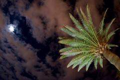 Moon (fxdx) Tags: moon palm night sky clouds nex6 tenerife spain