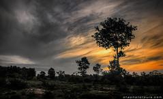 20161005_1243_Sunrise Tree (otaphoto16) Tags: sunrise dawn otaphototours countryside tree light surreal canon70d cambodia twilight nature bush