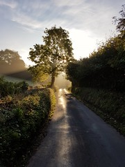 Another way 21/31 (rmrayner) Tags: lane sunrise rays devon morning light tree
