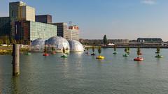 Floating Trees Rotterdam (Jan Wildeboer) Tags: rotterdam sigma1750