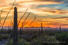 A View Of SawTooth (playful_i) Tags: picachopeak sawtoothmountain cactus evening horizon landscape night saguaro sun sunset