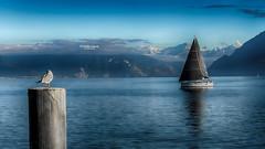 Alors on regardait les bateaux... (Tra Te E Me (TTEM)) Tags: lumixfz1000 photoshop cameraraw suisse lausanne lac leman bateau mouette eau montagnes bleu voile sommet oiseau