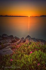 Looking Out (Laura Macky) Tags: emeryville sunset marina goldengate bayarea landscape