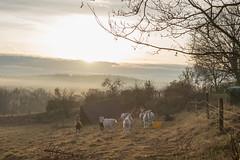 Hohenstein IV (Schermannski) Tags: sonne nebel sunrise sonnenaufgang hessen misty fog animals