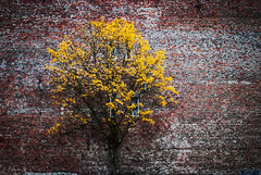 hues (ewitsoe) Tags: tree fall trees autumn ostrow poland ewitsoe nikond80 35mm street building city architecture citylie students europw cold wall