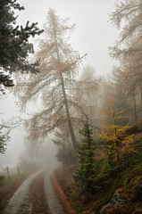 Autumn, Mountain (Perfect Gnat) Tags: italy italia valledaosta aosta saintdenis autumn mountain tree road nature fog mist clouds lavese ostellolavese wood forest