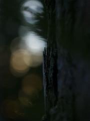 _IGP9285_web (Erik Koffmar) Tags: winter forest wood dark tree fir bokeh helios koffmar uppsala norby sweden 58mm 442 pentax k10d russian vintage vintagelens