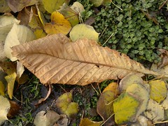 2016-10-25-7178 (vale 83) Tags: autumn leaves nokia n8 thebestyellow coloursplosion lunaphoto colourartaward friends autofocus