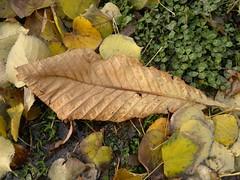 2016-10-25-7178 (vale 83) Tags: autumn leaves nokia n8 thebestyellow coloursplosion lunaphoto colourartaward friends autofocus