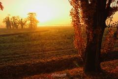 Autumn colours (andreaprinelliphoto) Tags: andreaprinelliphoto andreaprinelli prinelli autunno autumn colori colours autumncolours icoloridellautunno ottobre novembre sun sunrise alba