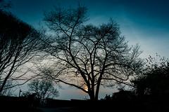 Biltmore-treeSunset (djshark5960) Tags: biltmore northcarolina