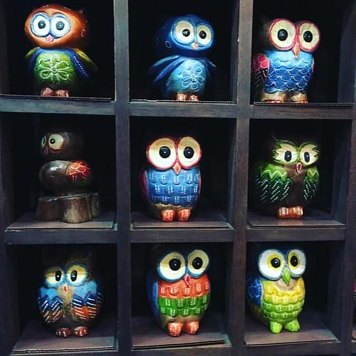 Owls ...