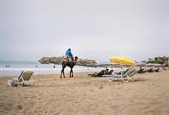 (louis de champs) Tags: minoltasrt101 mdwrokkor35mm28 film kodak portra160 taghazout morocco beach sea camel umbrella