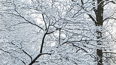 First Snow (Bobby Mou) Tags: white cold seasons nature intimatelandscapes abstract art wisconsin snow winter outdoor tree patterns branches