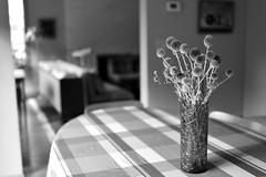 AlliumM1 (l i v e l t r a) Tags: allium bw table modern plant flower tone room vase spike thorny lamps tonal light