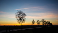 Evening twilight (++sepp++) Tags: bayern deutschland dezember lechfeld landschaft landscape bavaria germany december bume trees dmmerung twilight dusk abenddmmerung eveningtwilight allee alley