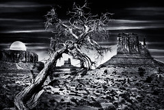 Ancient Evening (D'ArcyG) Tags: monumentvalley blackandwhite monochrome nightshadows juniper gnarly clouds moon night evening darkness west desert mountains