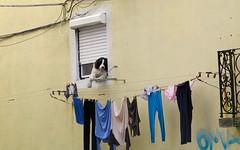 LISBOA S WINDOW 000-989 (Honevo) Tags: honevo hnevo lisboa window lisbon europa europe dog