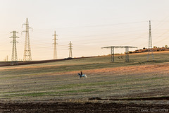 Skirting the electron forest (The Whisperer of the Shadows) Tags: horse man hombre caballo campo country countryside landscape landscapesfromlamancha paisaje lamancha ciudadreal sunset dusk atardecer solitario lonely cowboy electricidad electricity tower torres highvoltage canon70200f4l warmlight luzcalida geotagged wires cables