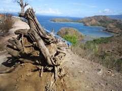 ROOT (PINOY PHOTOGRAPHER) Tags: mati city davao oriental sur mindanao philippines asia world
