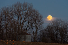Super Moon over Lakeville (dtredinnick13) Tags: moon fullmoon supermoon farm pumpkins pumpkinpatch storagebin evening lakeville mn minnesota november nikon d800