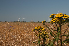 20130720_IMG_0095 (anriro96) Tags: elements heemsen nienburg feld ernte gras getreide blau blue sky rohrsen weser sun summer