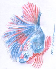 pez en lapices de colores (ivanutrera) Tags: draw dibujo drawing dibujoenlapicesdecolores coloredpencils lapicesdecolores fish pescado pez animal sea seaworld