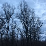 All the leaves are gone and the sky is gray on such a winter's day thumbnail