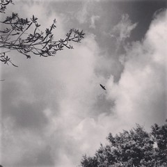 (silenthurricanes) Tags: trees sky cloud tree bird birds clouds skies cloudy