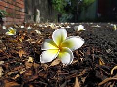 ,~~ (Annie's EYEsWorLd) Tags: life city flower color fleur canon flor taiwan tainan  fiore