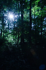 A Light in the Darkness (Truebritgal) Tags: blue light shadow ohio sun sunlight black tree green nature silhouette vertical forest dark lens woods nikon darkness bright peaceful richmond christian bible nikkor sunbeam brightness shaft secluded wooded 18200mm d7000 psalm137 truebritgal