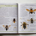Insects, Spiders and Other Terrestrial Arthropods