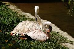 (ddsnet) Tags: bird birds zoo sony hsinchu taiwan  900      sinpu hsinpu bird  zoo zoobird  900