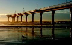 Anglų lietuvių žodynas. Žodis sea swallow reiškia jūros nuryti lietuviškai.