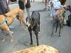 7-22-2012ArnoldArboretum004