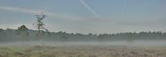 Grondmist (Bert (A.H.) Roos) Tags: morning mist nature weather fog landscape thenetherlands natuur morgen ochtend landschap weer gelderland barneveld kleinbylaer