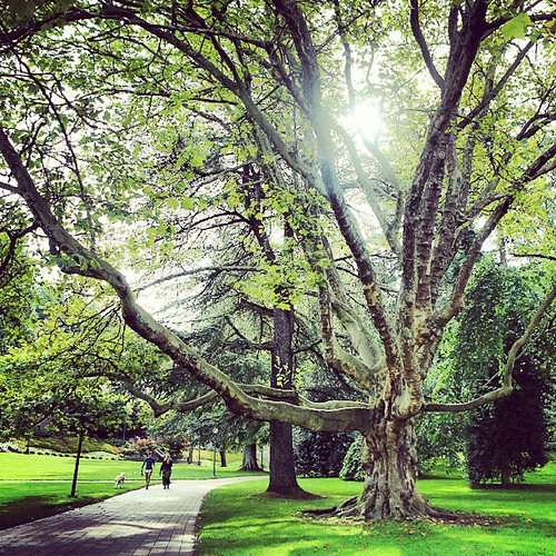 Do you have a favorite tree on campus? (Yes, that's a serious question! We're rather proud of our tree collection.)