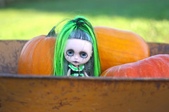 Millicent at the pumpkin patch