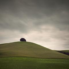 One Sheep Hill (Weeman76) Tags: newzealand sheep southisland lonetree sh1 paulwheeler afszoomnikkor2470mmf28ged d800e