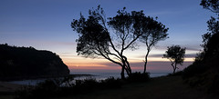 Little Bay Cresent Moon Panoramic (Puresilk Images (AWAY)) Tags: panorama sunlight moon seascape tree silhouette sunrise canon landscape bay coast little central sigma australia panoramic nsw f18 18 centralcoast headland littlebay cresent 1835 70d eos70d