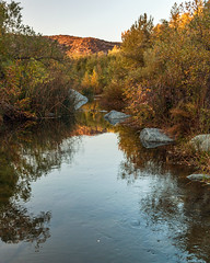 (rowjimmy76) Tags: november autumn usa fall nature forest canon landscape outdoors oak woods unitedstates hiking vegetation southerncalifornia sandiegocounty santamargaritarivertrail falbrook 5dm2 5dmii