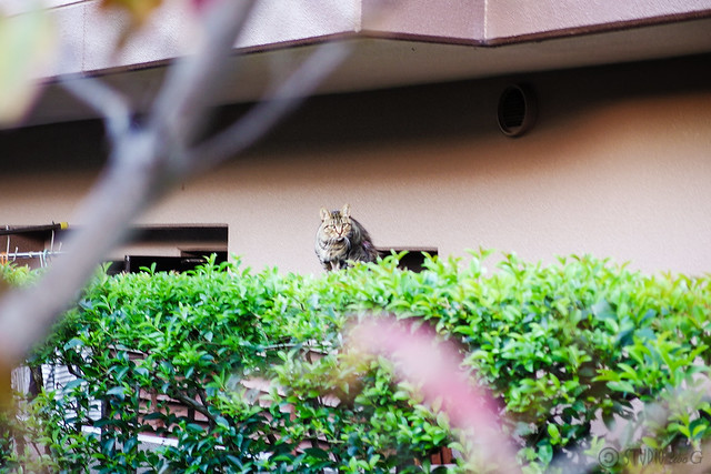 Today's Cat@2013-11-09