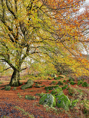 Better Than Padley (matrobinsonphoto) Tags: autumn red orange tree green mill nature colors leaves stone countryside leaf colours view bright district derbyshire sheffield hill peak millstone surprise quarry autumnal bolehill hathersage bole grindleford vision:plant=0683 vision:outdoor=0661