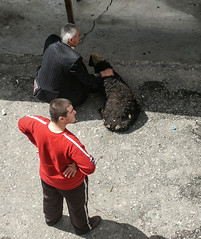 Khor Virap monastery (Tiigra) Tags: travel people animal village 2006 armenia ararat khorvirap lusarat funorinterest otheranml