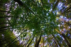Reverse (Atreides59) Tags: arbre tree nature pentax kr pentaxart arbres trees up green vert