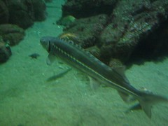 """The Monterey Bay Aquarium • <a style=""""font-size:0.8em;"""" href=""""http://www.flickr.com/photos/109120354@N07/11042834755/"""" target=""""_blank"""">View on Flickr</a>"""