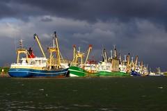 Kotters in de haven van Skil. (Romar Keijser) Tags: 6 storm haven wadden december zee 12 texel skil oudeschild 2013 springtij 6122013